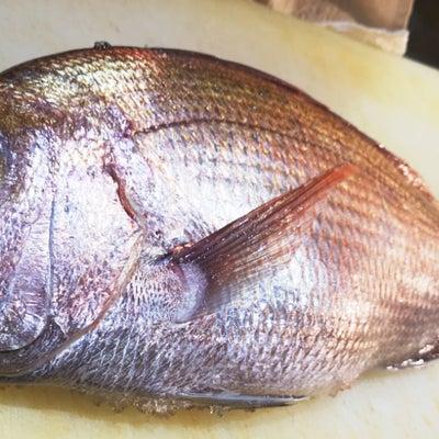 愛媛・宇和島『天然真鯛』の記事に添付されている画像