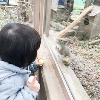 東武動物公園へ…の記事に添付されている画像