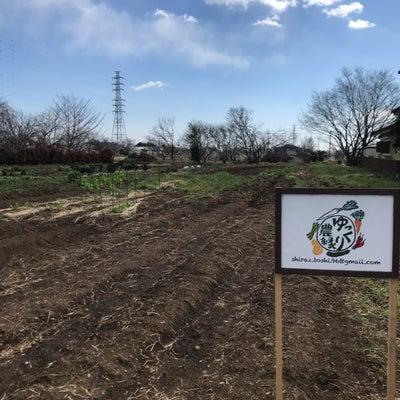 無肥料栽培という生き方♪の記事に添付されている画像