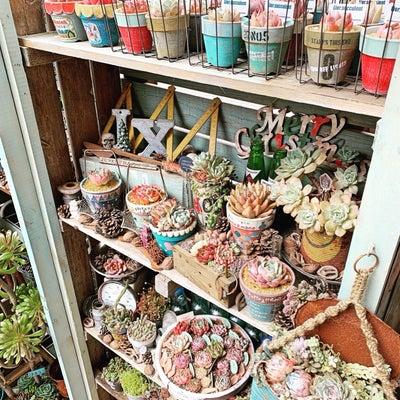 ◆5時間のタニパト〜多肉棚がスッキリさっぱりです!!!の記事に添付されている画像