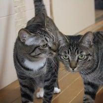 我が家の あるある・・猫のないしょ話の記事に添付されている画像