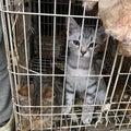 #猫の多頭飼いの画像