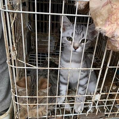 【転載】埼玉県上尾市・猫多頭飼育問題 ~動物愛護法も機能しないの記事に添付されている画像