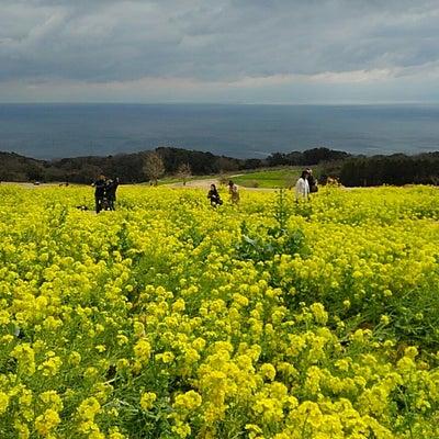 春のフリーウォークin淡路島(あわじ花さじき)2019/03/16の記事に添付されている画像
