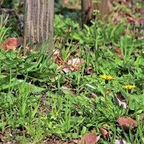 春の陽の記事に添付されている画像