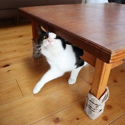 3/16 後編(タカシ君の正式譲渡といつもの猫ブログ)の記事に添付されている画像