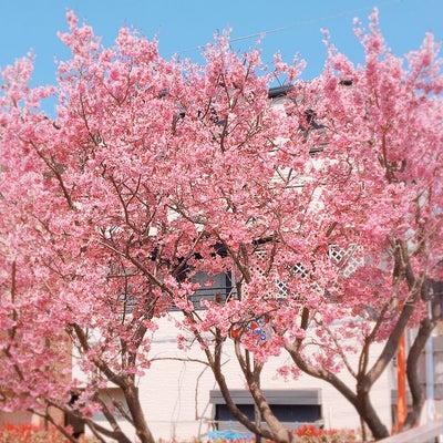 2019.03.17 どんとこい家 / 和田町の記事に添付されている画像