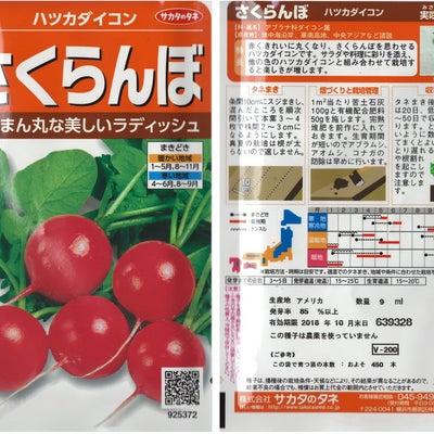 ラディッシュさくらんぼの種蒔きの記事に添付されている画像