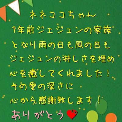 ネネココちゃんに感謝状を♡の記事に添付されている画像