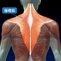 なぜ、日本人は肩が凝りやすいの?の記事に添付されている画像