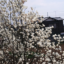 3月16日☆友達☆の記事に添付されている画像