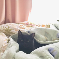 暖かい場所で眠るネコ。の記事に添付されている画像