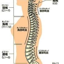 胸椎が姿勢を制すの記事に添付されている画像