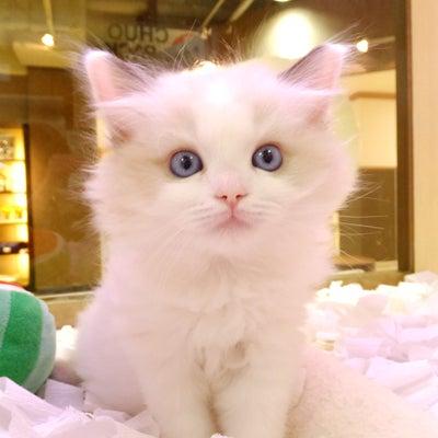 ペットショップオーパ鳥栖店「☆ぬいぐるみ☆」の記事に添付されている画像