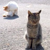 週報は、今からUPするYO☆彡 占い師MIAさんとカラオケ(笑)の記事に添付されている画像