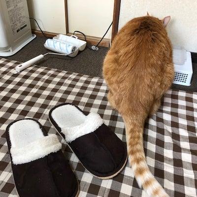 今日はミュージックの日と隠れ家の猫たちの記事に添付されている画像