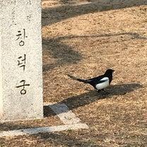 楽しい旅行〜野鳥編の記事に添付されている画像