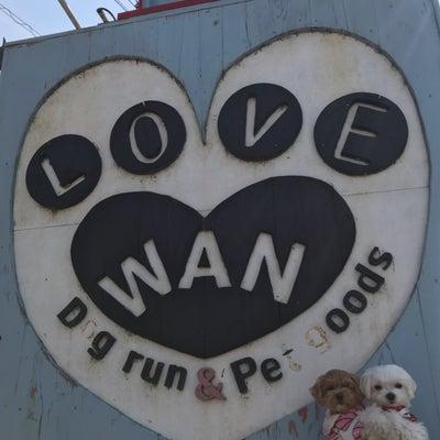 ドッグランカフェ…LOVE WANの記事に添付されている画像