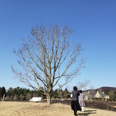葉祥明美術館♡冬から春へ編♡の記事に添付されている画像