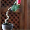 #モダン盆栽の画像