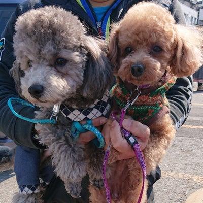 フリマレポ☆松戸南部市場フリマの記事に添付されている画像