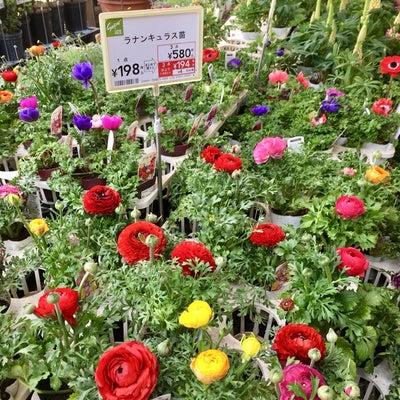 カインズ って植物安いよね (*´∀`*)  と、気になる植物達の続き ☆の記事に添付されている画像