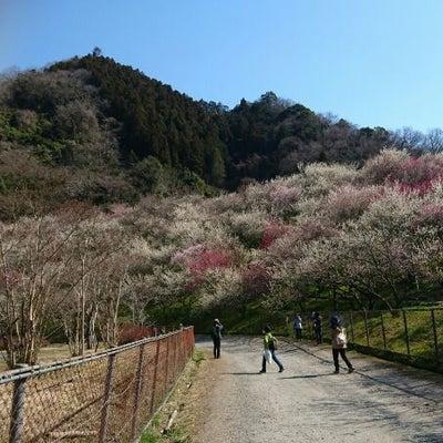 今年2回目高尾山と梅林の記事に添付されている画像