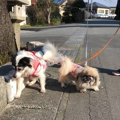 お散歩日和♡カニちゃんの記事に添付されている画像