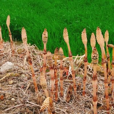 春も保湿が大切です!の記事に添付されている画像