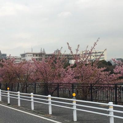 愛知県大府市 ハクビシン対策の記事に添付されている画像