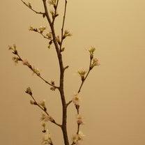 春が近づいての記事に添付されている画像