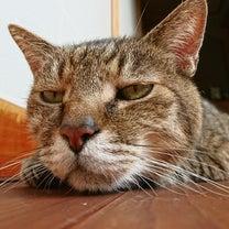 目の疲れにおススメなのが♡の記事に添付されている画像