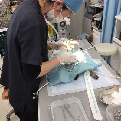 ☆3.22 さくらねこの日の誓い 不幸な猫は増やさない☆の記事に添付されている画像