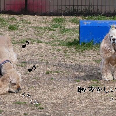 恋する幸太郎の記事に添付されている画像