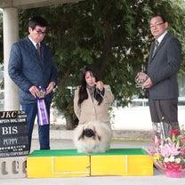 ジャパンインターナショナルドッグショーの記事に添付されている画像