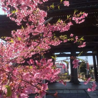 春 1人神社の記事に添付されている画像