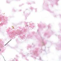 【開催レポ】3/14ビッグフラワーリクエストレッスン♡の記事に添付されている画像