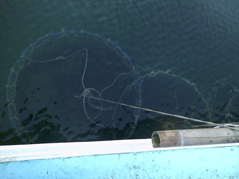 漁師が鮮魚を産直販売 鮮魚仕入れ 漁師さん直送 …
