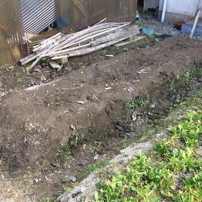 ブロッコリーの跡地を耕運、畝立てしました。の記事に添付されている画像