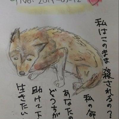 ★3月19日(火)期限★栃木の怯えて可哀想なワンちゃんに救いの手を!の記事に添付されている画像