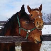 日本初のホースシェルターを実現しよう!引退馬に第2の馬生を!の記事に添付されている画像