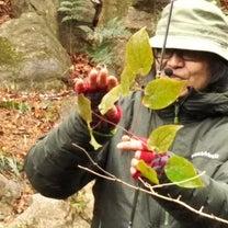 神戸市立森林植物園&生田神社へ…「雨女」とか「晴れ女」って、本当にいるのかな?・の記事に添付されている画像