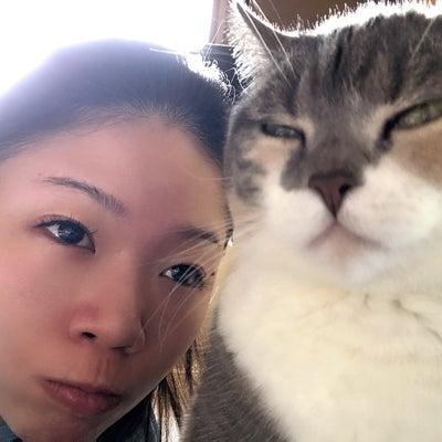 観客は猫の記事に添付されている画像