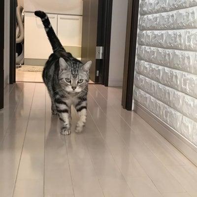 猫マスターになる!の記事に添付されている画像
