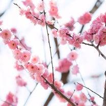 【いよいよ!】2019年の桜撮影すぐそこ!の記事に添付されている画像