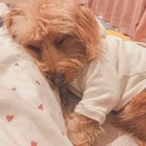 起こしても寝てないと言って寝続ける夫の記事に添付されている画像