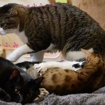 みんな仲良くね&場末のスナック猫物語の記事に添付されている画像