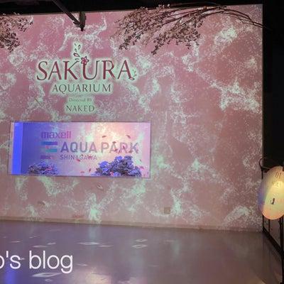 桜アクアリウムへの記事に添付されている画像
