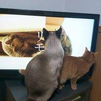 猫も杓子も。の記事に添付されている画像