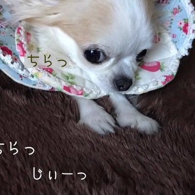 お出掛け日和のドッグサロン♪の記事に添付されている画像